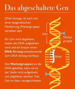 s37-infografik-gen-thickbox
