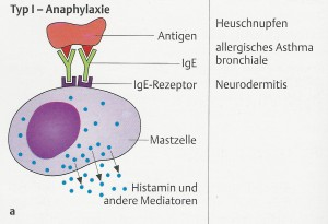 allergietyp1