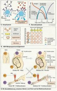 immunantwort_allergie_serumkrankheit