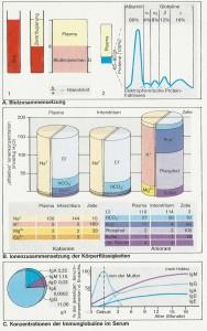 immunantwort_blutzusammensetzung_immunglobuline